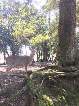 Deer walking among the trees