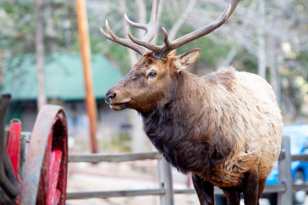 Estes Park Colorado 2021 Summer Guide