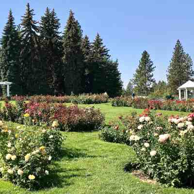 image of rose garden manito