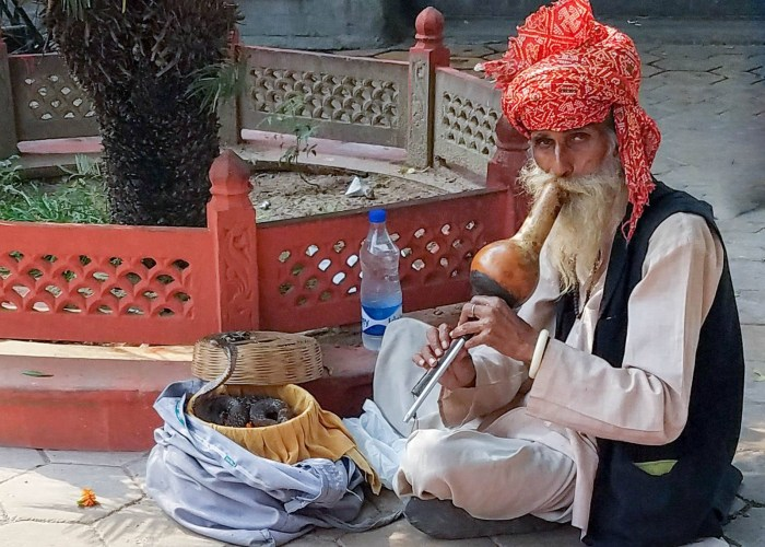 Everyday Postcard - Snake Charmer in India