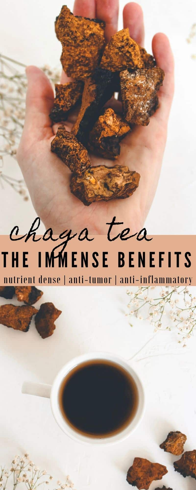 Chaga has been used for centuries due to it's mass healing capabilities. Learn how to brew chaga tea, the many benefits of the chaga mushroom, & more!