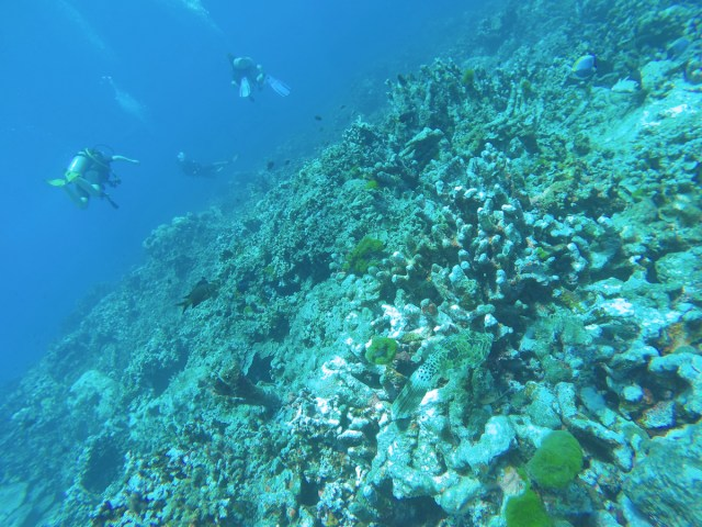 Koh_Tao_Scuba_Diving