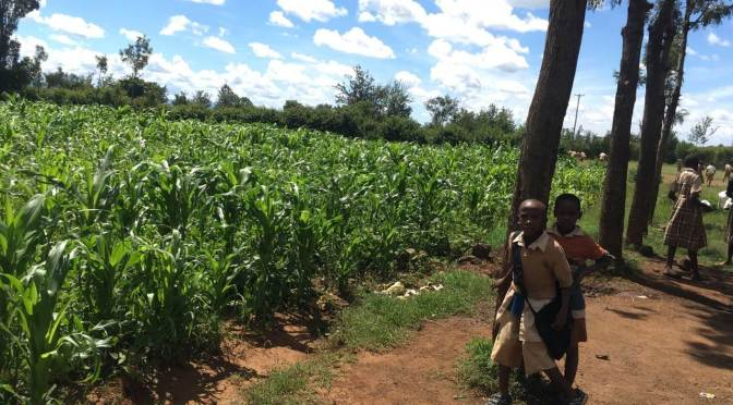 corn field in Kampi Ya Moto, Kenya