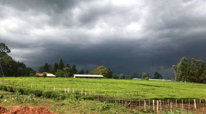 In production: a storm in tea country