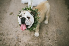 Dog waering floral crown in need of a drink afgter a long day looking fabulous