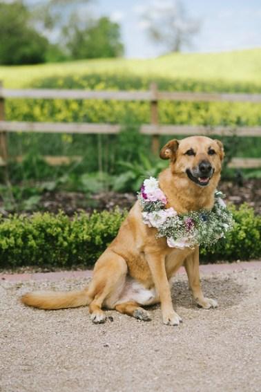 Beautiful Shepherd cross wearing floral crown at wedding