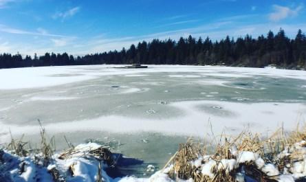 Frozen Lost Lagoon, Stanley Park, Vancouver
