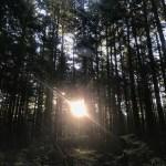 Race Recap: Foretrails Hallow's Eve Trail Race and Phantom Run