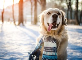 How cold is too cold  outside for pets?