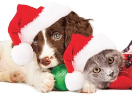 Holiday Season Tips for your Pets