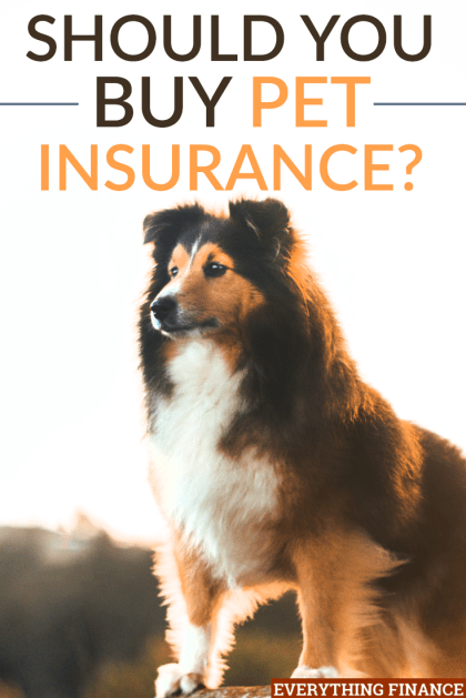 Pets get sick and injured just like us. This is why some people have considered pet insurance to help cover the costs of healthcare and vet bills for pets.