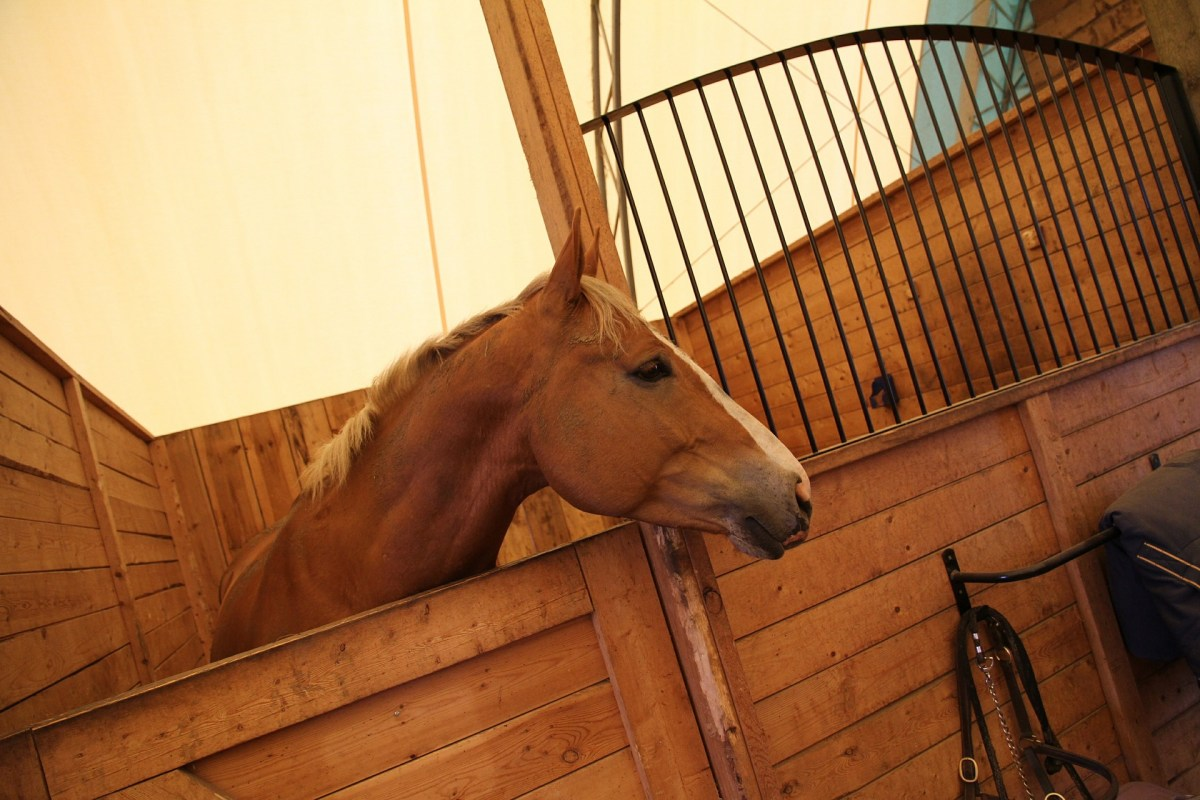 Stable Yard Etiquette - Top  15 Tips to help keep everyone happy ....