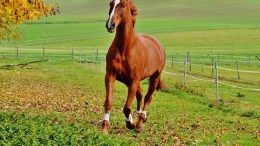 Equine Digestive System 10 Interesting Facts