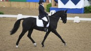 Sandro's Storm Novice Restricted Champion, ridden by Hannah Bown-small
