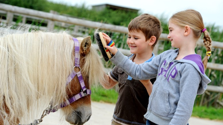 Bransby Horses Rescue and Welfare
