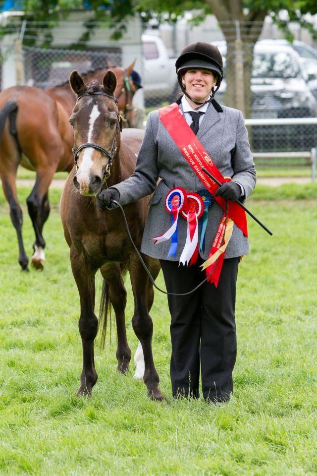 World Horse Welfare Lion - Rescue Classes Champion