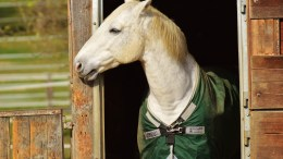 top 20 excuses not to ride your horse