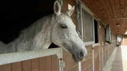 Choosing the right stable yard