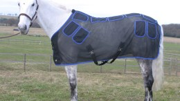 Magnetic Therapy for Horses