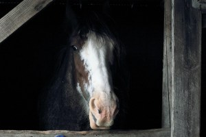 Money Saving Tips for a Happy Horsey Winter