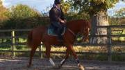 Progress - Steph Gumn riding Alvin