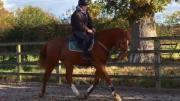 Progress - Steph Gumn riding Alvin