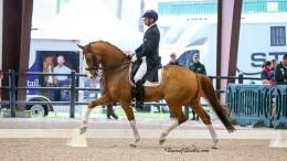 Steffen Peters and Bailarino, Image credit ©SusanJStickle.