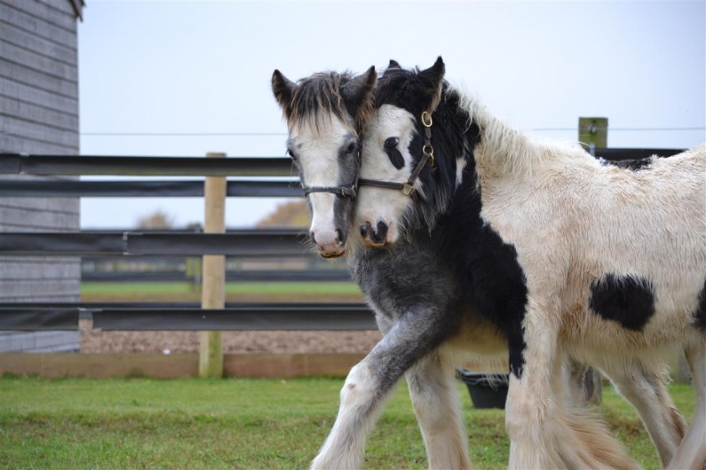 Blue Cross Burford Seek New Home for Frodo and Gandalf