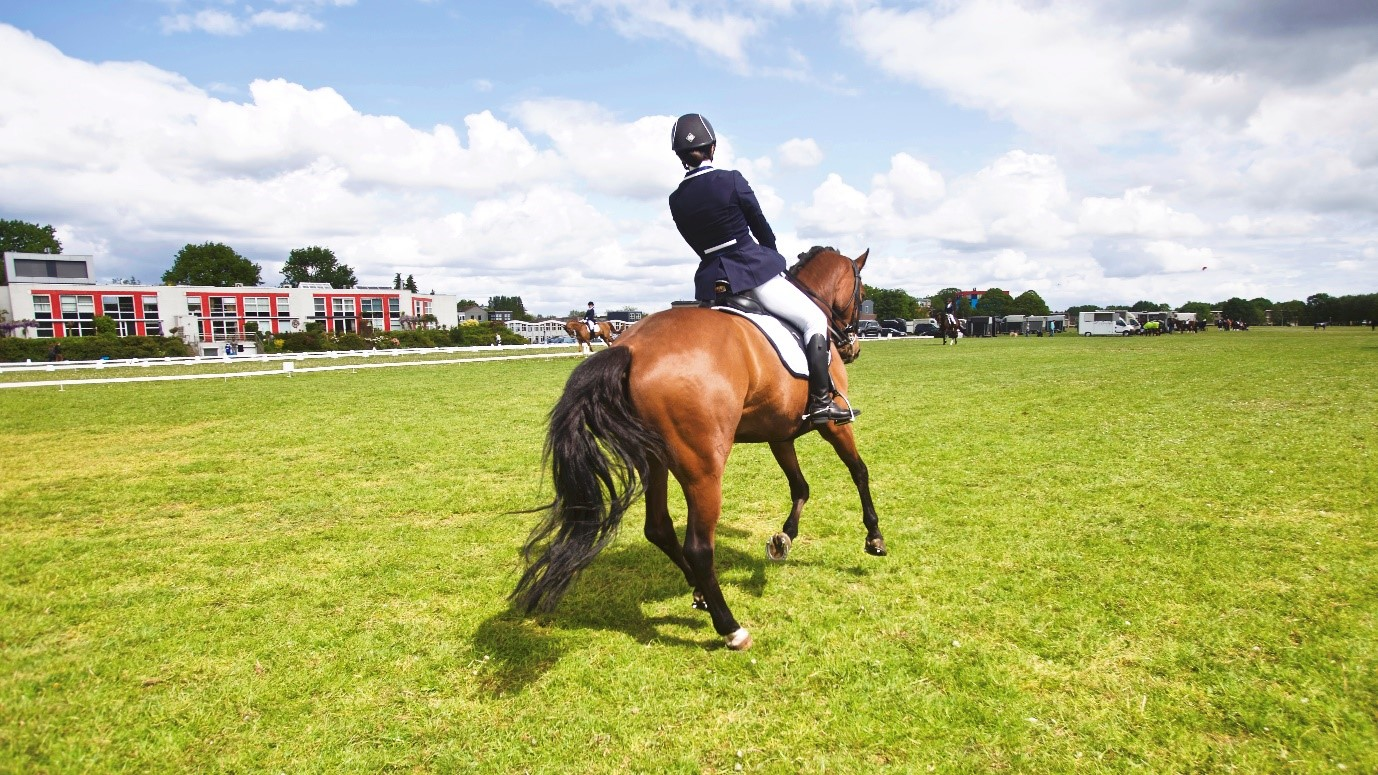 Top tips for your very first dressage test