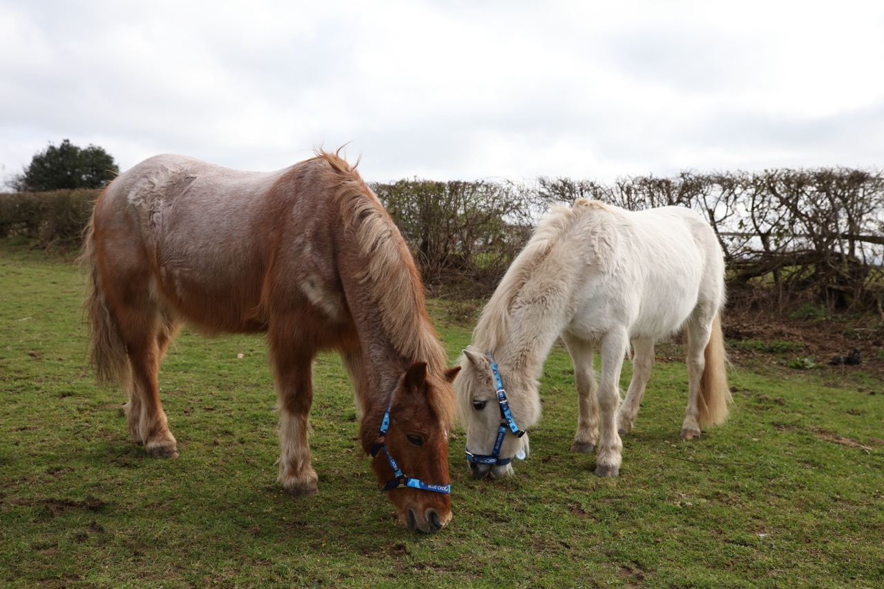 Blue Cross therapy pony helps sick and disabled children