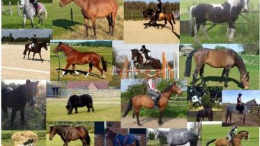 Just some of the horses rehomed via RMH
