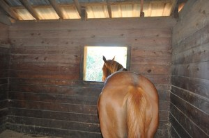 Stable Health - Get your stable ready for winter