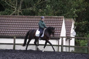 Master your Centre Line and the Half 10 Metre Circle with Georgie Bennett- Think ahead and prepare when turning up the centre line.