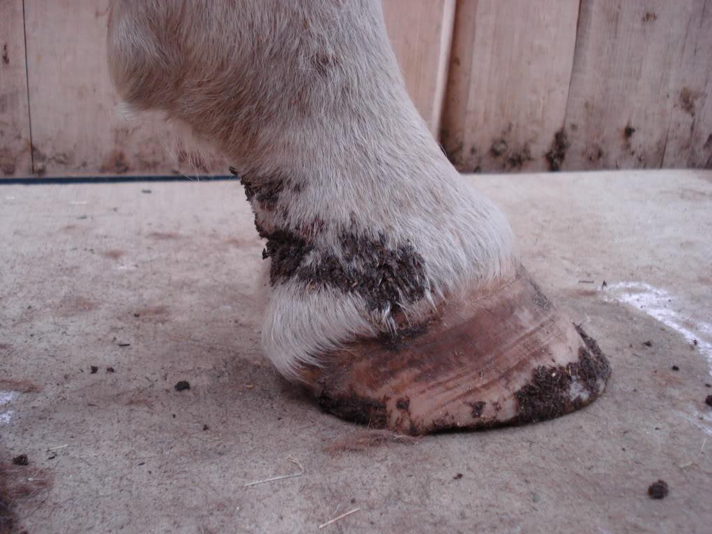 Mud Fever Explained – Equine Winter Health