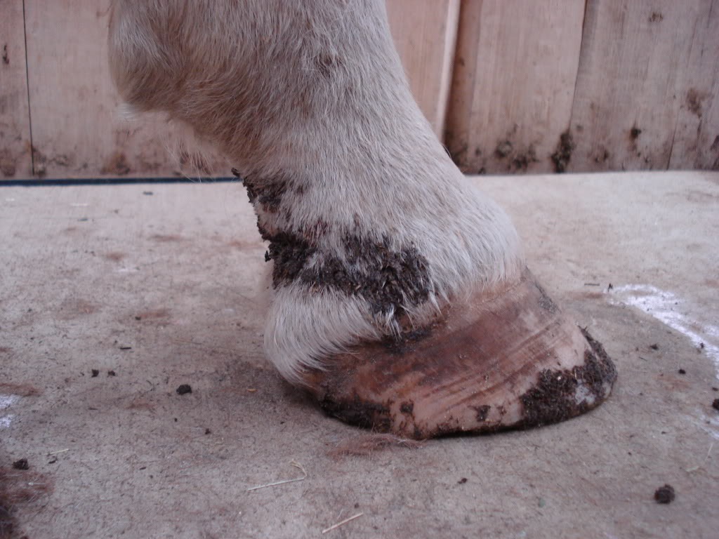 Mud Fever Explained - Equine Winter Health