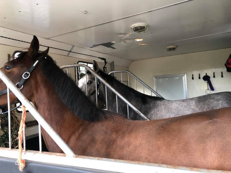 Why Horse Box and Trailer Insurance is Necessary