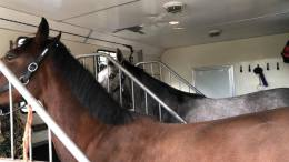 Why Horse Box and Trailer Insurance is Necessary - Image SG Sports Horses