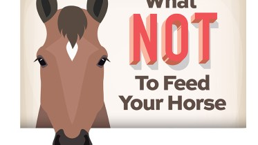 what not to feed your horse header