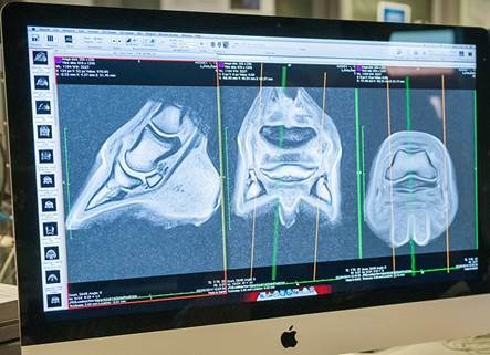 CT Scan images of a horse's hoof