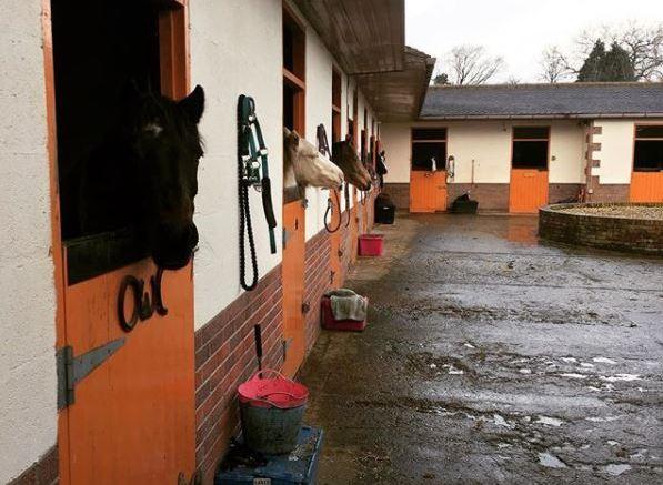 stable yard equipment