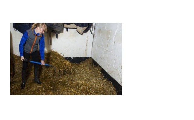 Study finds stable ammonia has detrimental impacts on your horses health