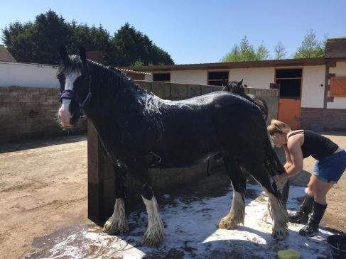 Four of the best horse shampoo's - Image credit Jayde Dog Grooming, Cheshire
