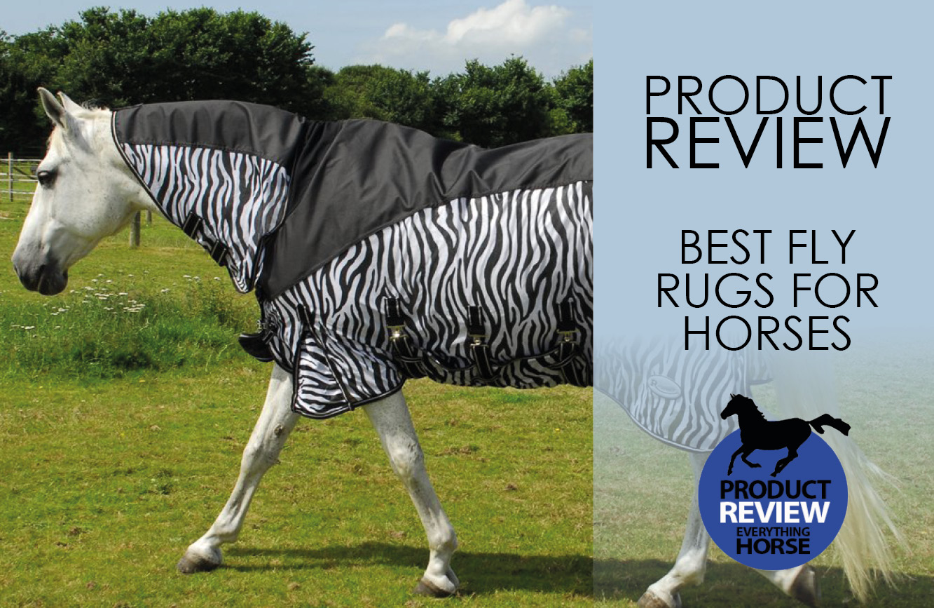 Best Fly Rugs For Horses Everything Horse