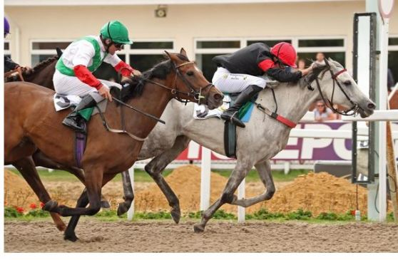arabian racing returns to ascot