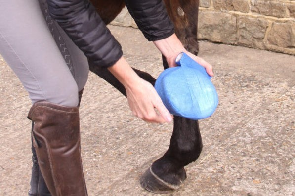 Hoof Abscess - common causes