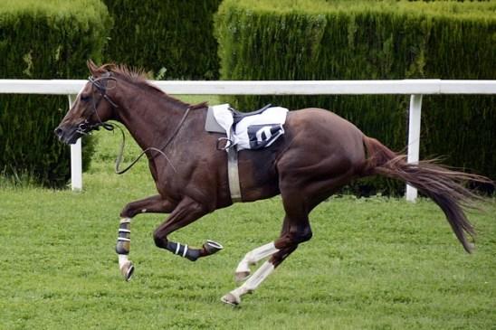 Oddschecker Announce Donation to Injured Jockeys Fund