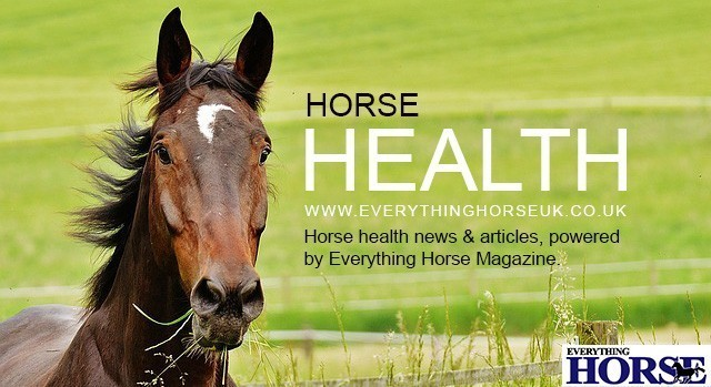 Horse Health articles on Everything Horse image