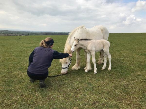 World Horse Welfare's Glenda Spooner Farm