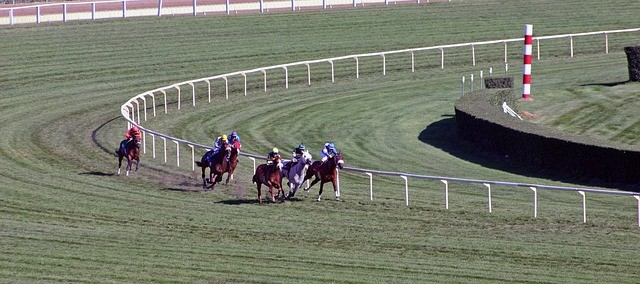 How to identify the best bet on race day?
