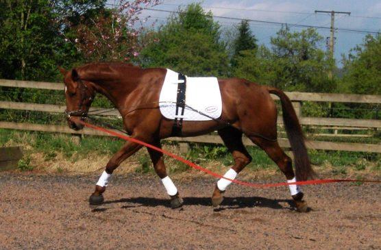 EquiAmi joins Elevator Equestrian